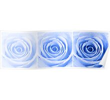 Blue Rose with Water Droplets Triptych Poster