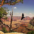 Grand Canyon Condour by Gregory Ballos | gregoryballosphoto.com