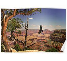 Grand Canyon Condour Poster