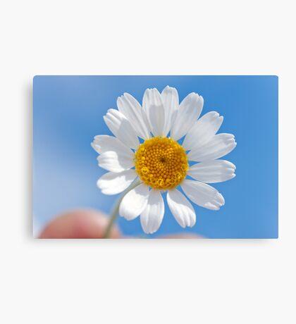 Daisy in the sky Canvas Print