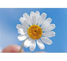 Daisy in the sky Photographic Print