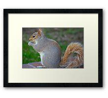 furry little animal Framed Print