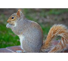 furry little animal Photographic Print