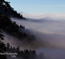 Where The Fog Meets The Trees by Kellie Sharpe