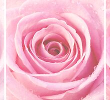 Pink Rose with Water Droplets Triptych by Natalie Kinnear