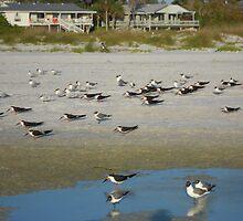 Beach birdies by lilyisabelle