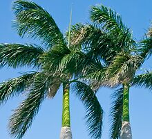 Palm Tree Tops by Henry Plumley