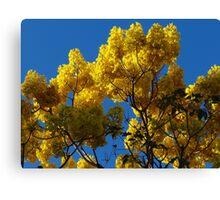 Yellow Blossoms In The Blue Sky - Flores Amarillas En El Cielo Azul Canvas Print