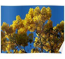 Yellow Blossoms In The Blue Sky - Flores Amarillas En El Cielo Azul Poster