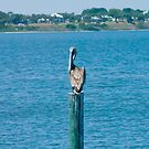 Pelican on a Pole by Henry Plumley