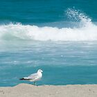 Seagull Sunning by Henry Plumley