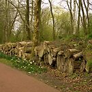 Wooded banks - the ReedCorner by steppeland