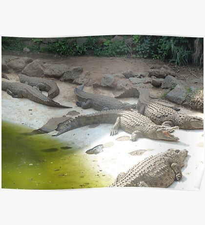Alligators will snap Poster