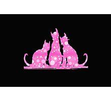 Pink Kitties Photographic Print