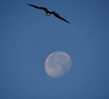 The Moon And The Bird I - La Luna Y El Pájaro by Bernhard Matejka