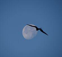 I Can See The Man In The Moon - Puedo Ver El Hombre En La Luna by Bernhard Matejka