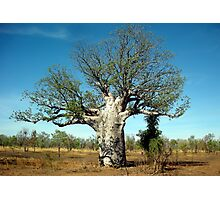 Baobab Tree Photographic Print