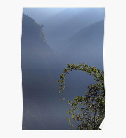 Bamboo and Morning Mist near Tatopani Poster