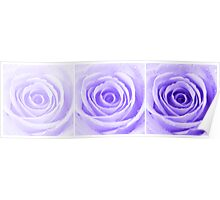 Purple Rose with Water Droplets Triptych Poster