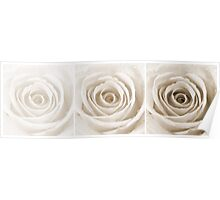 Sepia Rose with Water Droplets Triptych Poster
