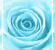 Turquoise Rose with Water Droplets Triptych by Natalie Kinnear