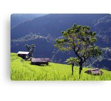 Bright Green Rice Field Nepal Canvas Print