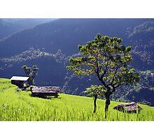 Bright Green Rice Field Nepal Photographic Print