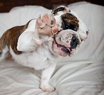 Ok, so give us a high five there dude!!! by Gideon van Zyl