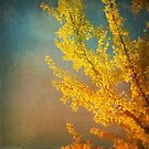 Yellow Ginkgo in Autumn by Olivia Joy StClaire