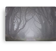 Dark Hedges in the Mist Canvas Print