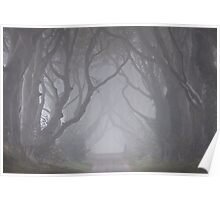 Dark Hedges in the Mist Poster