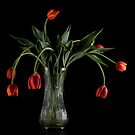 Wilting Tulips  by RandiScott