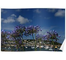 Agapanthus on the Scillies Poster