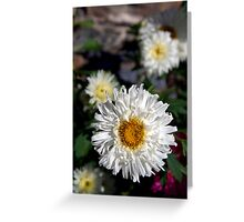 Daisies in Pisang Greeting Card