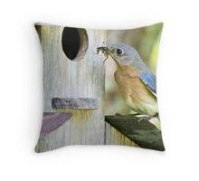Bluebird female feeding her babies Throw Pillow