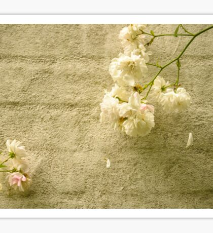 White roses on a sand colored wall Sticker