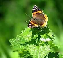 Red admiral in a Sea of Green by Ron Russell