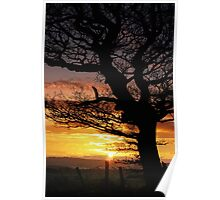 Sunset and Tree Poster