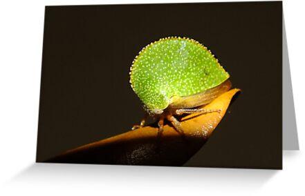 Texas Tree Hopper by Bill Morgenstern