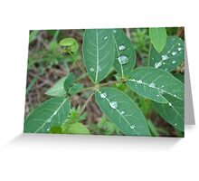 Leaves with Water Drops - Omega - 7-10 Greeting Card