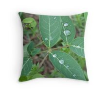 Leaves with Water Drops - Omega - 7-10 Throw Pillow