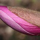 burgundy turgescence by yvesrossetti
