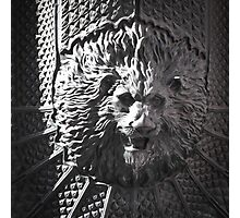 Lion head Photographic Print