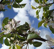 My Apple Flowers by jinglessmile