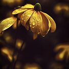 The Yellow Flower by makbet666