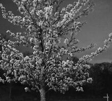 A Midnight Blossom  by nauruking