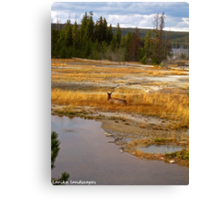 An evening in Yellowstone Canvas Print