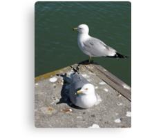 Love Gulls Canvas Print