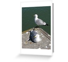 Love Gulls Greeting Card