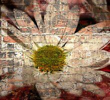 The Daisy Wall by AuntDot